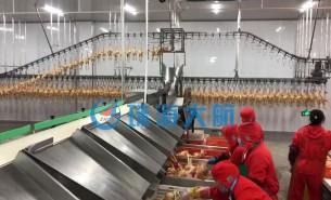 禽肉厂分拣生产线